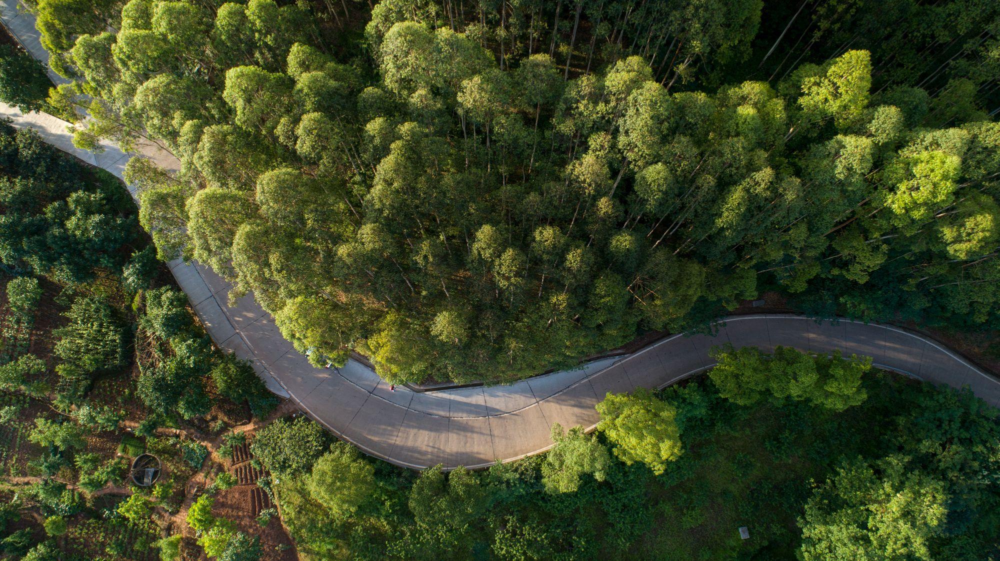 俯拍绿道(龙泉山城市森林)